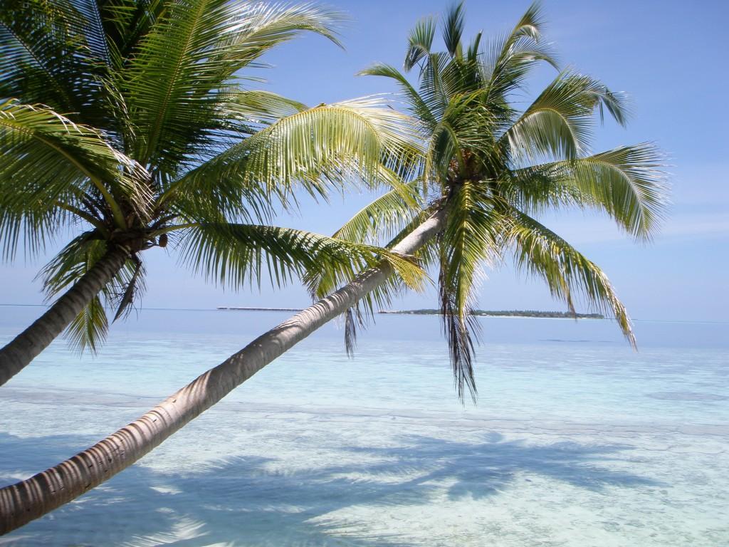 Wenn möglich auf die Malediven…